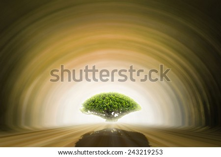 Tree on Tunnel  - stock photo