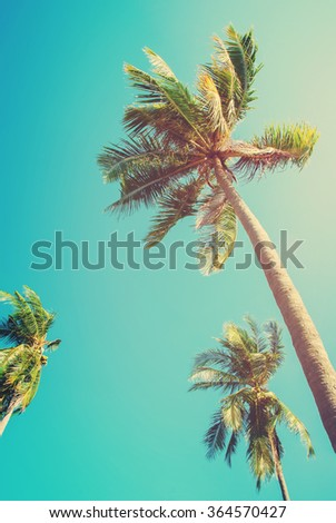Tree palm trees on clean blue sky. View up. Tropical holiday background for travel design. Vintage toned grunge effect - stock photo