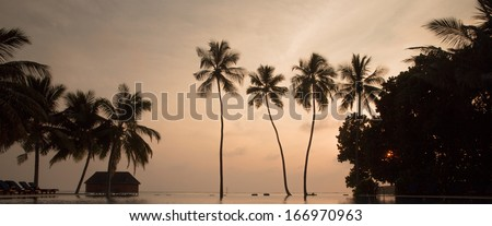 Tree palms in sunset with pool in front plane - stock photo