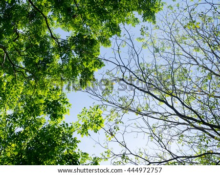 Tree. Perspective unique nature green leave view from under big green tree. Two sides of different tree, one has green leaves another one has a few leaves. Natural, season and environment concept. - stock photo