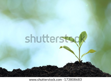 Tree plant grown, green background - stock photo