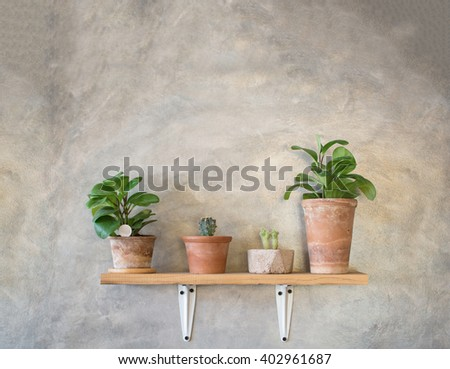 Tree pot and Cactus in pots on grey concrete wall - Background - stock photo