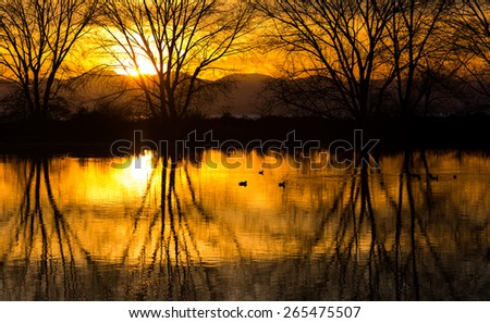 tree reflection in a pond, vancouver bc canada - stock photo