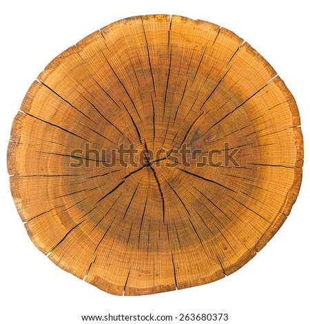 Tree Rings Isolated On White - stock photo