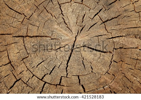 Tree rings old weathered wood texture with the cross section of a cut log.   - stock photo