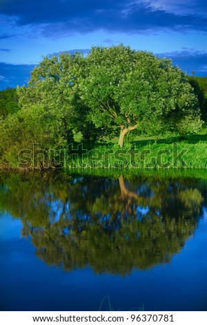 tree,  river Irpen - stock photo