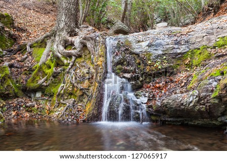 Tree roots and waterfall mirror each other in nature's own harmonious way - stock photo