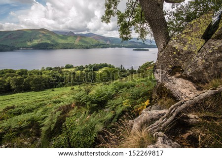 Tree roots on lakeside - stock photo