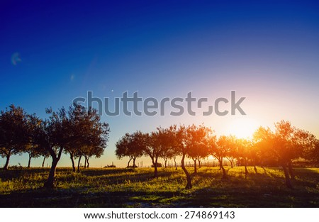 Tree shadow with sunset - stock photo
