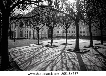tree shadows in morning Dresden, Germany - stock photo