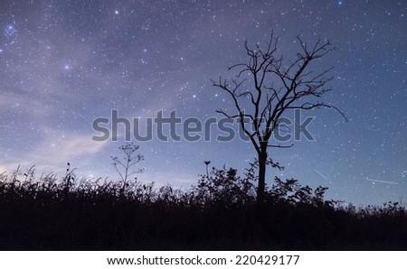 Tree silhouette and night sky - stock photo