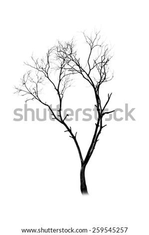 Tree silhouette on white background - stock photo