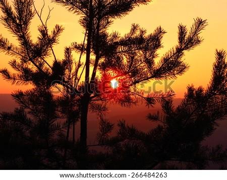 tree silhouette over beautiful orange sunset, evergreen wood over sundown - stock photo