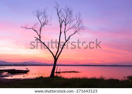 tree silhouette river at sunrise. - stock photo