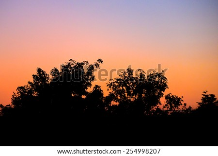 Tree silhouette with morning sky - stock photo