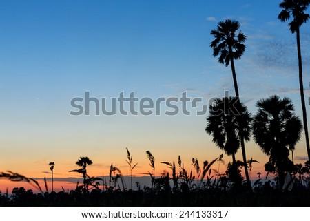 Tree Silhouettes - stock photo