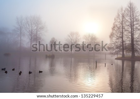 tree silhouettes at misty morning in autumn park - stock photo