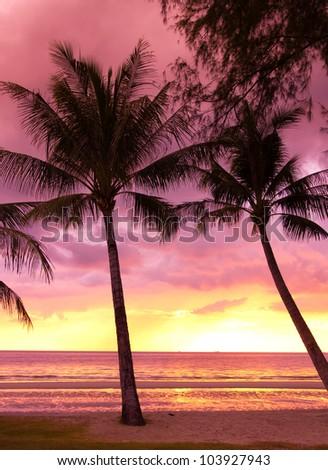 Tree Silhouettes Burning Skies - stock photo