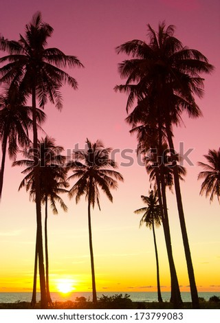 Tree Silhouettes Burning Skies  - stock photo