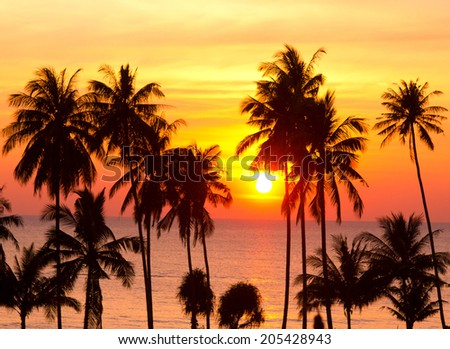 Tree Silhouettes Idyllic Wallpaper  - stock photo