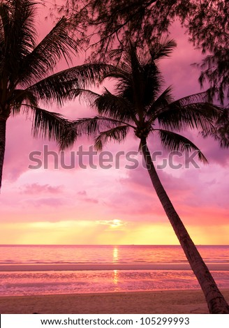 Tree Silhouettes Night is Coming - stock photo