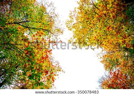 tree, sky, jungle - stock photo