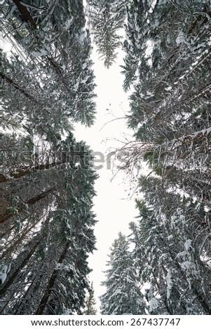 Tree sky snow - stock photo
