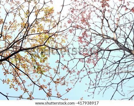 tree spring leaf beautiful - stock photo