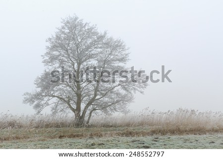 Tree standing in a foggy cold winter landscape - stock photo