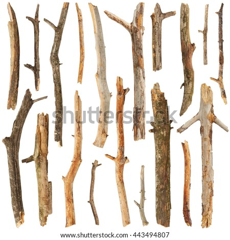 Tree sticks set isolated on white background - stock photo