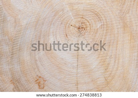 Tree stump, round cut with annual rings - stock photo