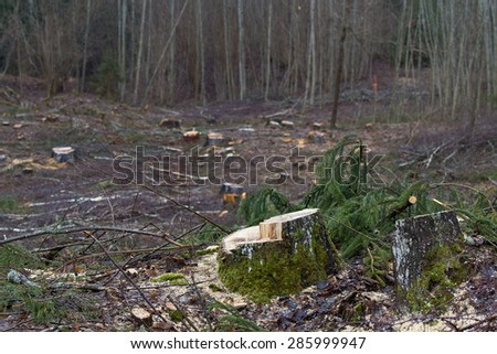 tree stumps and felled forest - stock photo