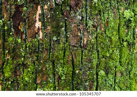 Tree Surface - stock photo