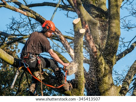 Tree surgeon hanging from ropes in the crown of a tree using a chainsaw to cut branches down.  The adult male is wearing full safety equipment.  Motion blur of chippings and sawdust. - stock photo