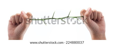 Tree thorns in hand isolated on white background - stock photo