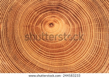 Tree timber texture for background. - stock photo