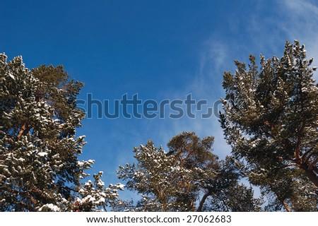 tree tops - stock photo