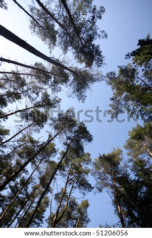 Tree tops and blue sky in a German forest from below - stock photo