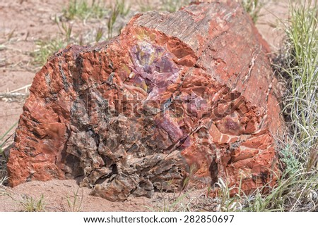 Tree Trunk at the Petrified Forest National Park in Arizona - stock photo