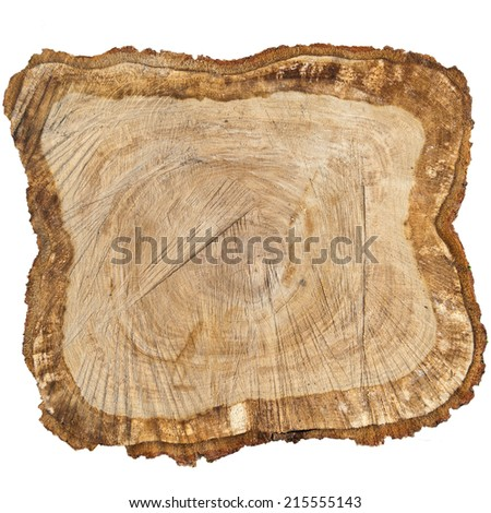 tree trunk cross section, isolated on white - stock photo