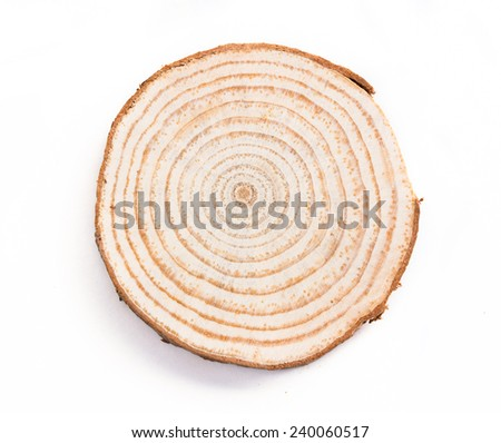 tree trunk cross section, isolated on white�£?? - stock photo