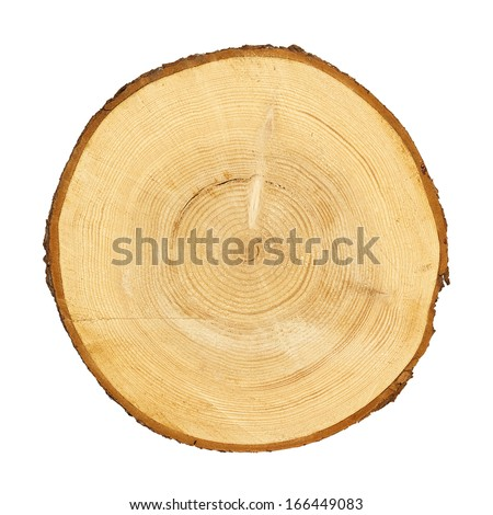 tree trunk cross section, isolated on white, clipping path included - stock photo