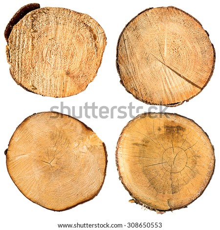 tree trunk cross section set, isolated on white, clipping path included - stock photo