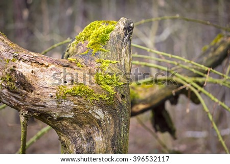 Tree trunk in forest covered with moss, in autumn. - stock photo
