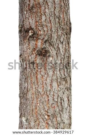 tree trunk isolated on white background  - stock photo