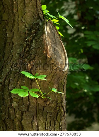tree trunk of Chestnut, cut-off branch and  young sprout   - stock photo