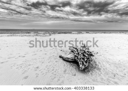 Tree trunk on the beach. Cloudy, stormy day. Black and white landscape. - stock photo