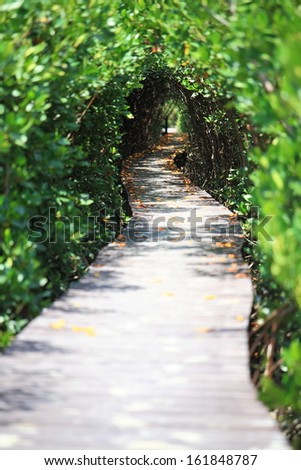 Tree tunnel and wooden bridge in mangrove, Thailand. - stock photo