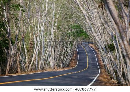 Tree tunnel cover public road - stock photo