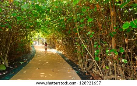 Tree tunnel in Hawaii - stock photo